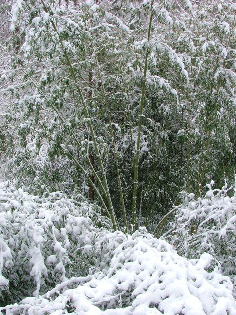 2010 snow atrov1